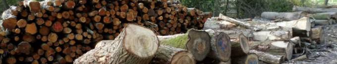 dood-hout-leeft