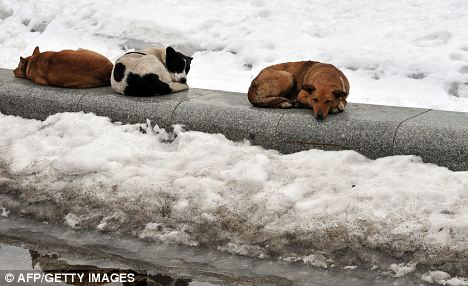 rescue honden